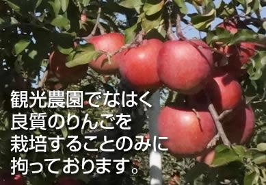 観光農園でなはく 良質のりんごを 栽培することのみに 拘っております。