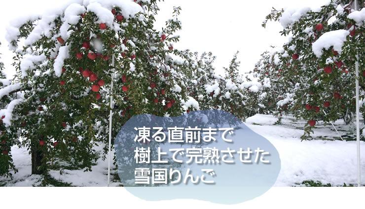 凍る直前まで 樹上で完熟させた 雪国りんご