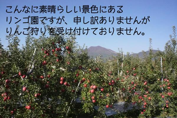 こんなに素晴らしい景色にある リンゴ園ですが、申し訳ありませんが りんご狩りを受け付けておりません。
