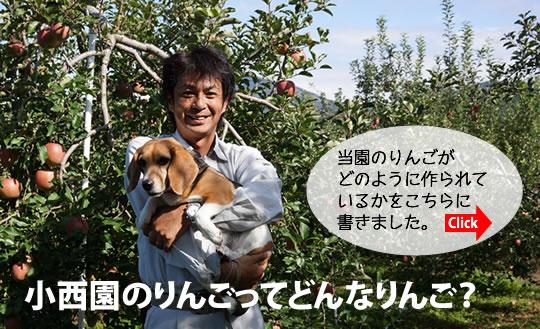 小西園のりんごってどんなりんご?当園のりんごがどのように作られているかをこちらに書きました。